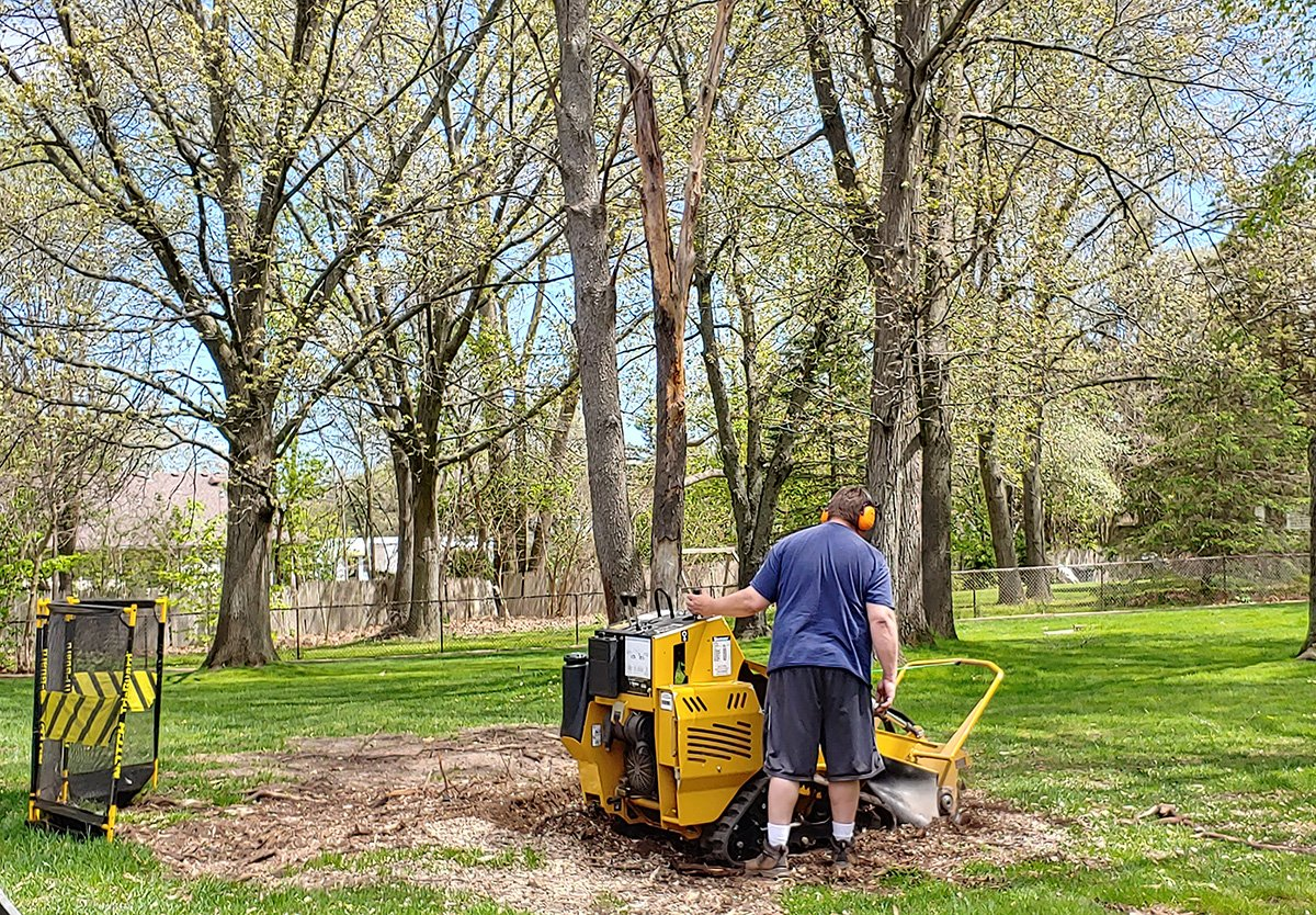 stump removal west bloomfield