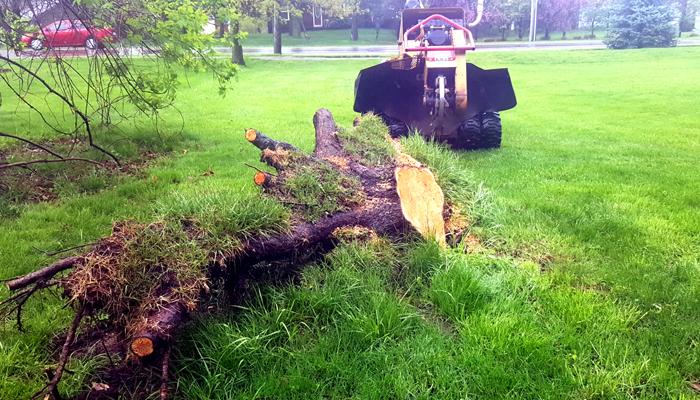 stump grinding lake orion